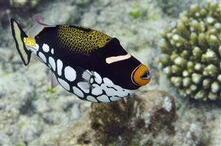 Underwater World Maldives
