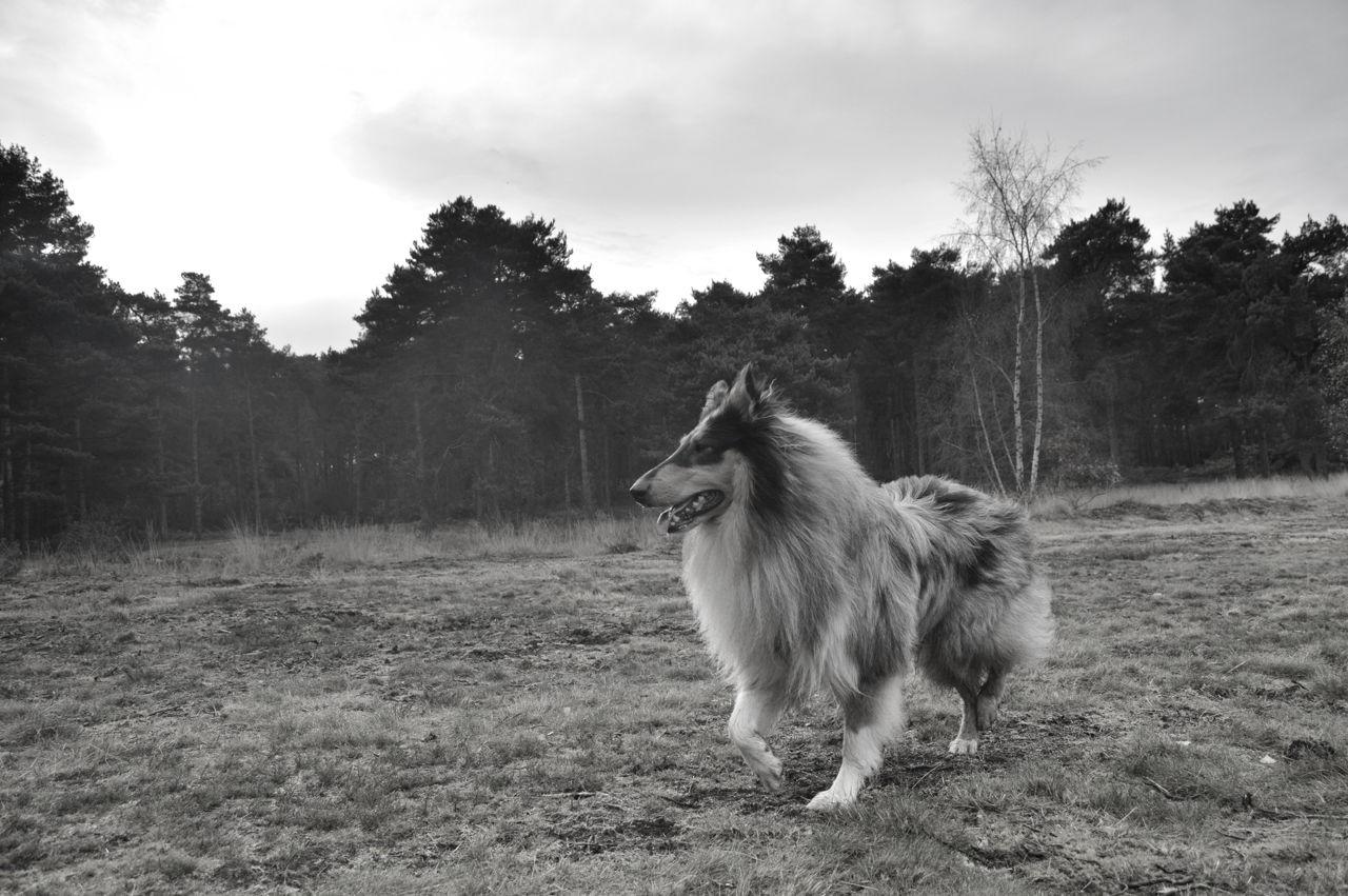 Natural Diuretics for Dogs