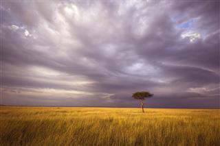 Africa Landscape