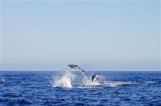 Jumping Dolphins Galapagos Ecuador