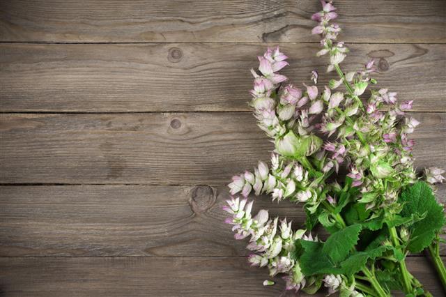 Sage Bouquet