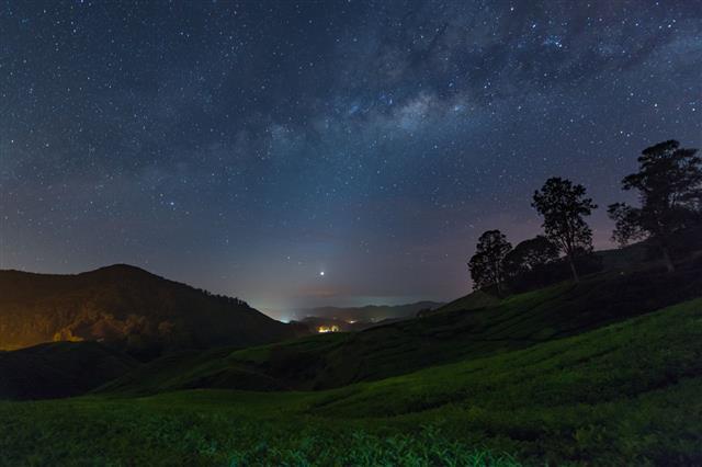 Milky Way Star And Tea Plantation