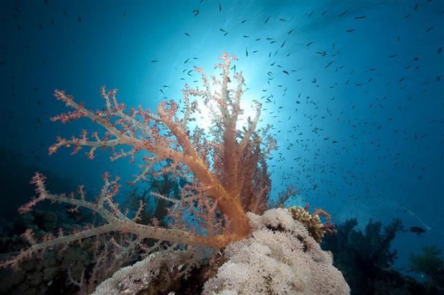 Ocean Coral And Fish