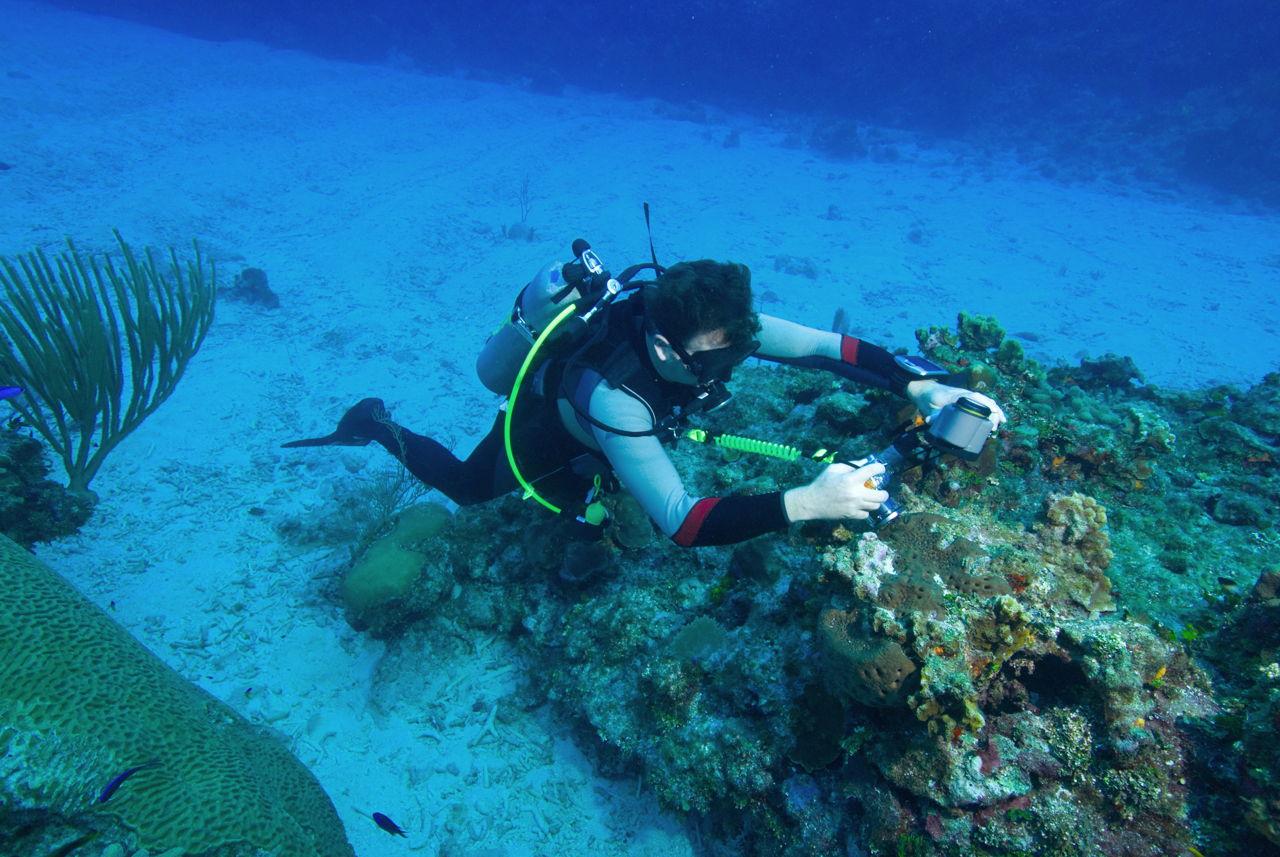 Best Disposable Underwater Camera