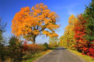 Autumn Landscape Road