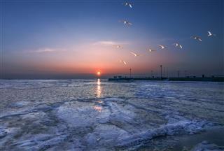 Swan Sky White Sails
