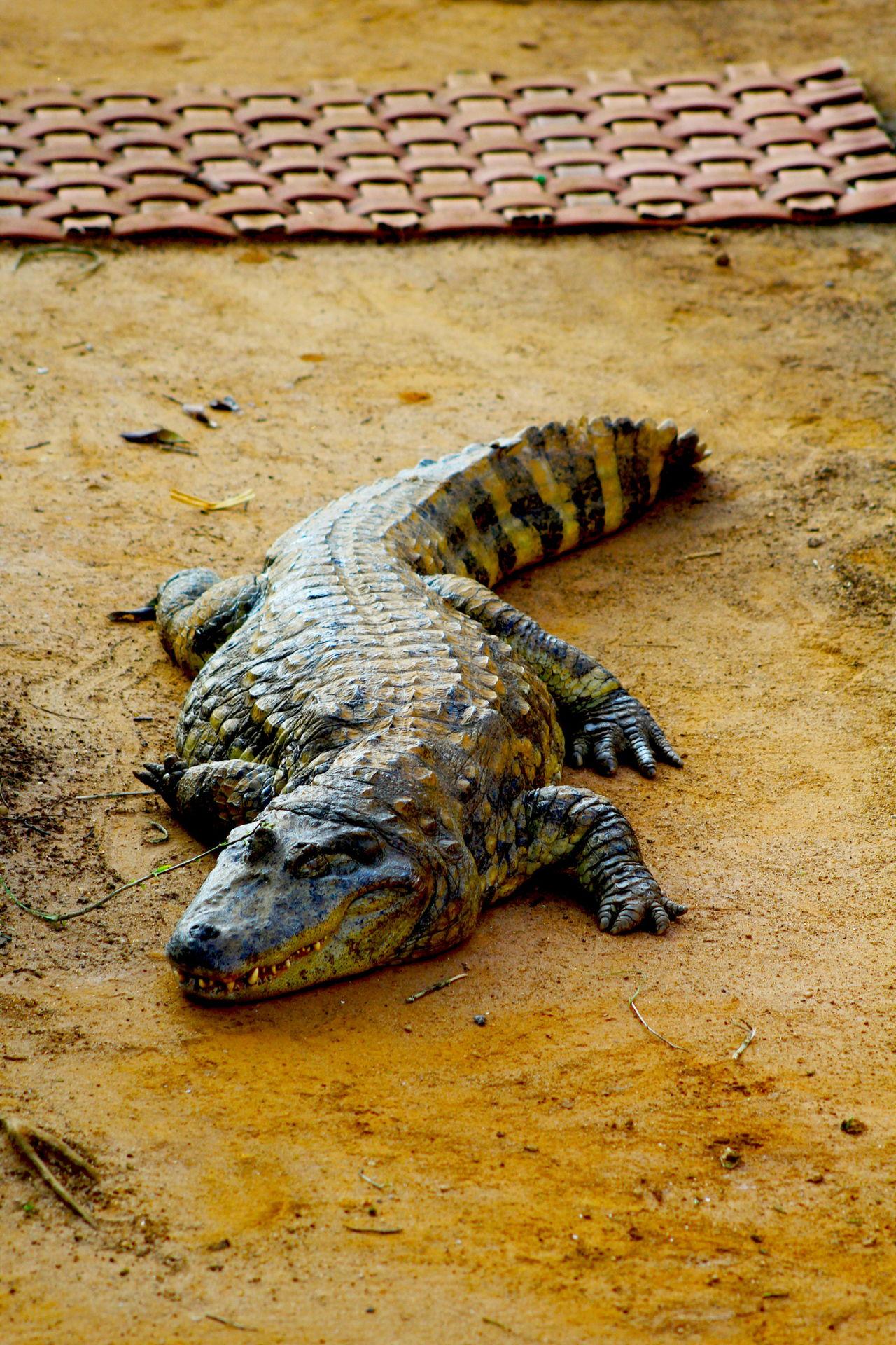 Unique Characteristics of Reptiles Explained with Pictures  Unique Characte...