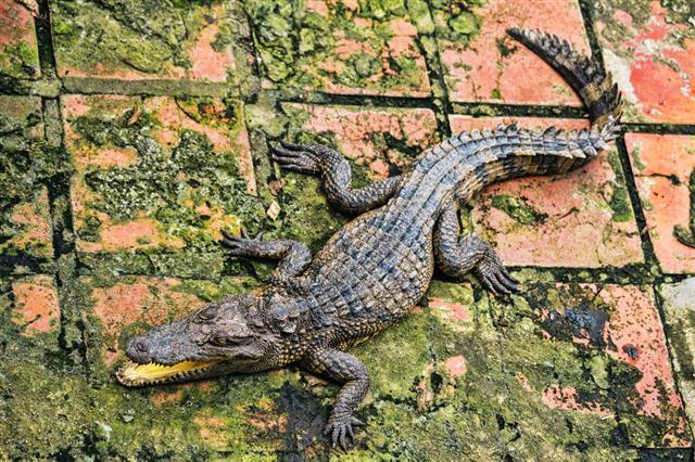 Water Bodies On The Crocodile Farm