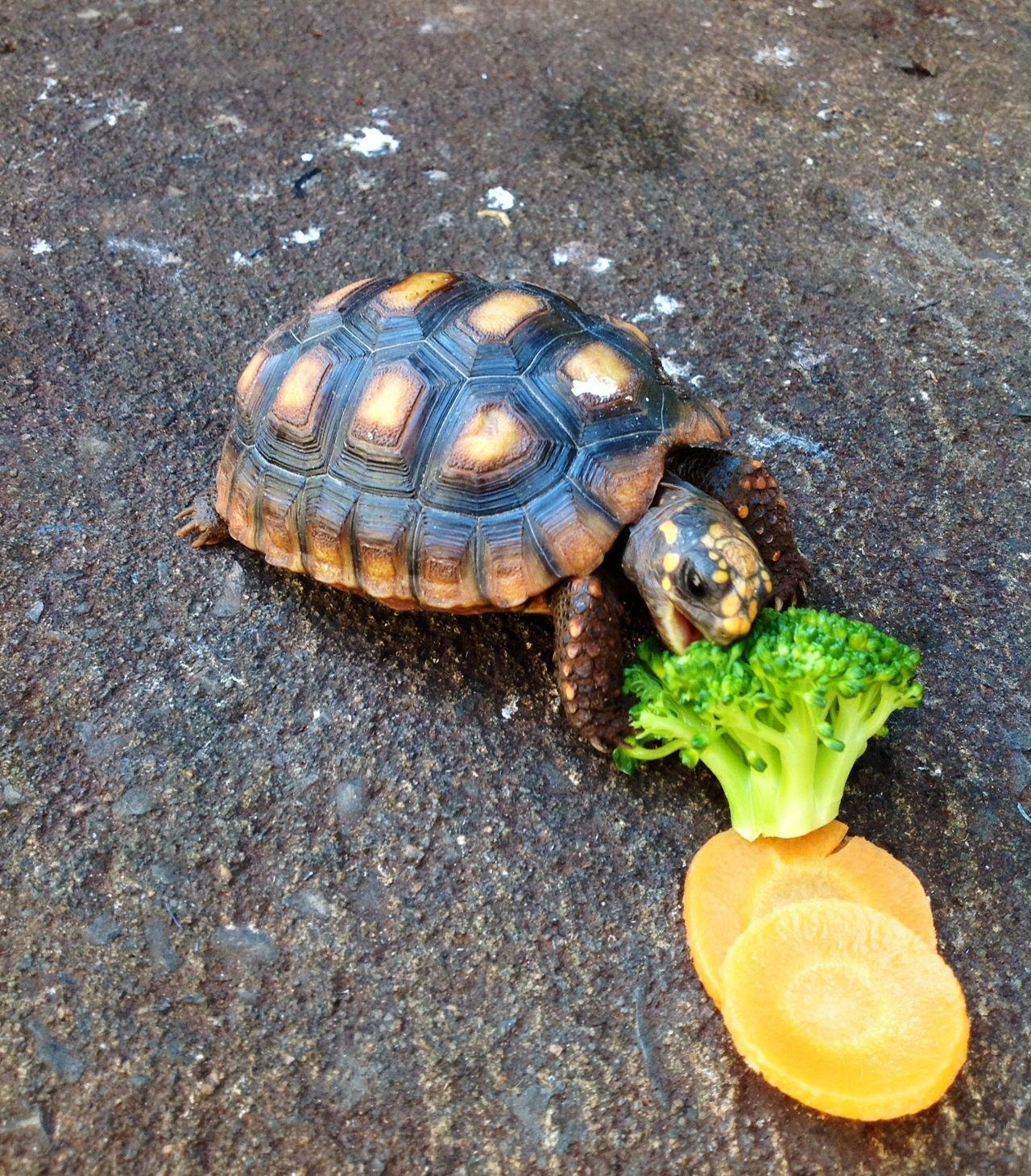 What do Turtles Eat - Pet Ponder