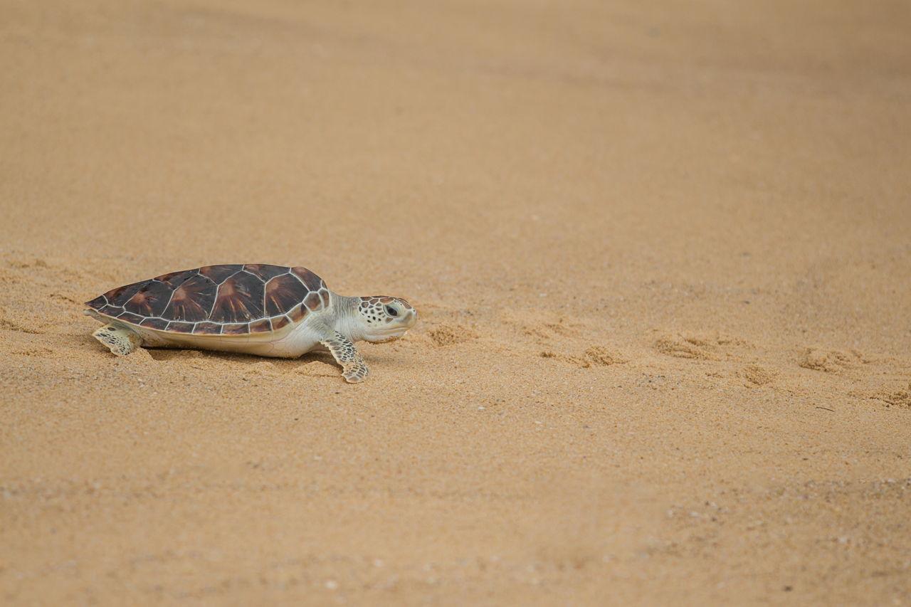 Turtle Beach Box