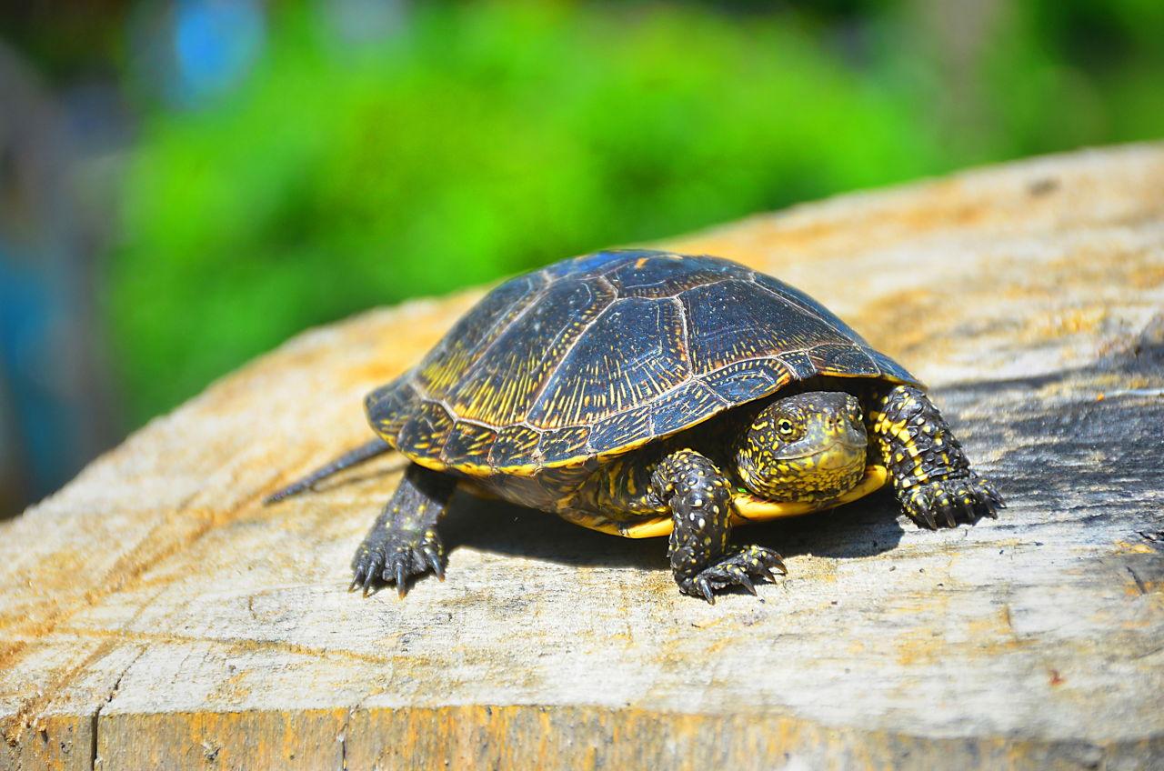 30 little turtles Friedman, thomas l 30 little turtles new york times 29 feb 2004 rpt in the allyn & bacon guide to writing john d ramage, john c bean, and june johnson 5th ed.