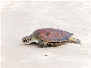 Turtle Release Florianopolis Brazil