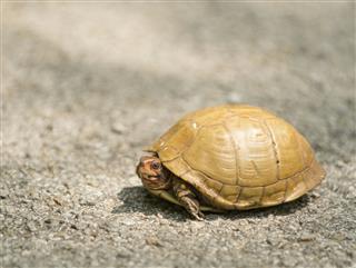 Turtle Wild Texas