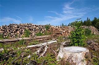 Clear Cut Logging Site
