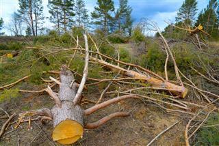 Deforestation Background