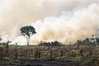 Brazilian Amazonia Burning