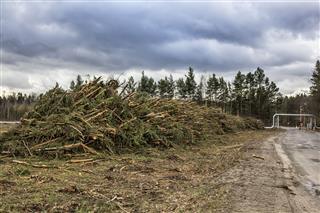 Deforestation In Poland