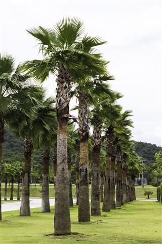Palm Tree Garden Plantation