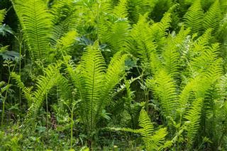 Bright Green Wild Fern