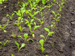 Plant In Organic Farm