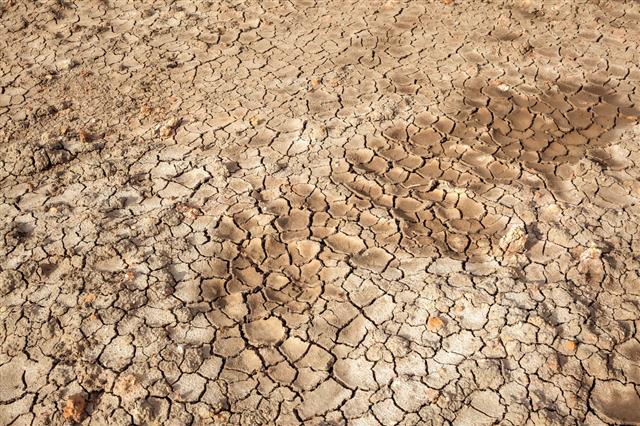 Dry Soil Crack Texture