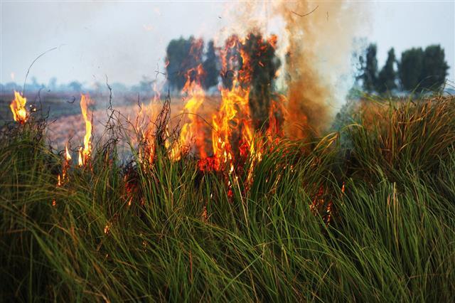 Burning Reeds
