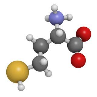 Homocysteine Amino Acid Molecular Model