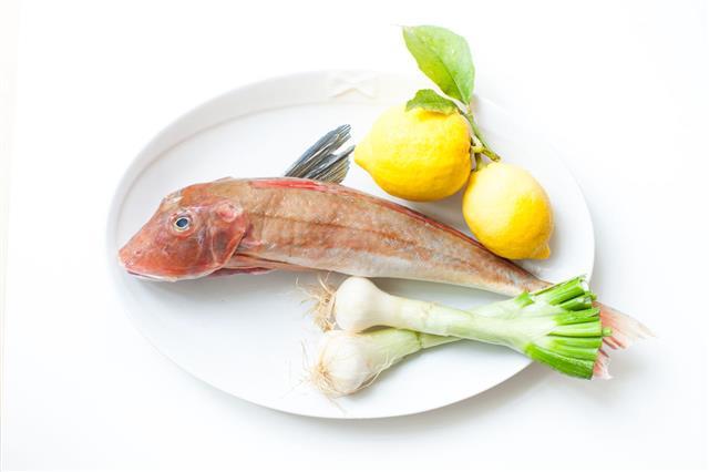 Tub Gurnard Raw Fish