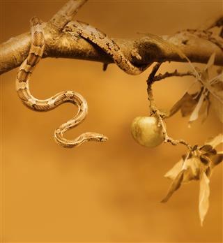 Temptation Snake