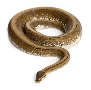 Spinner Python