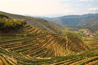 Vineyards Near Duero River