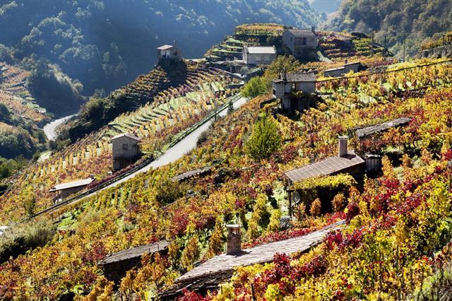 Ribeira Sacra Vineyards And Small Cellars