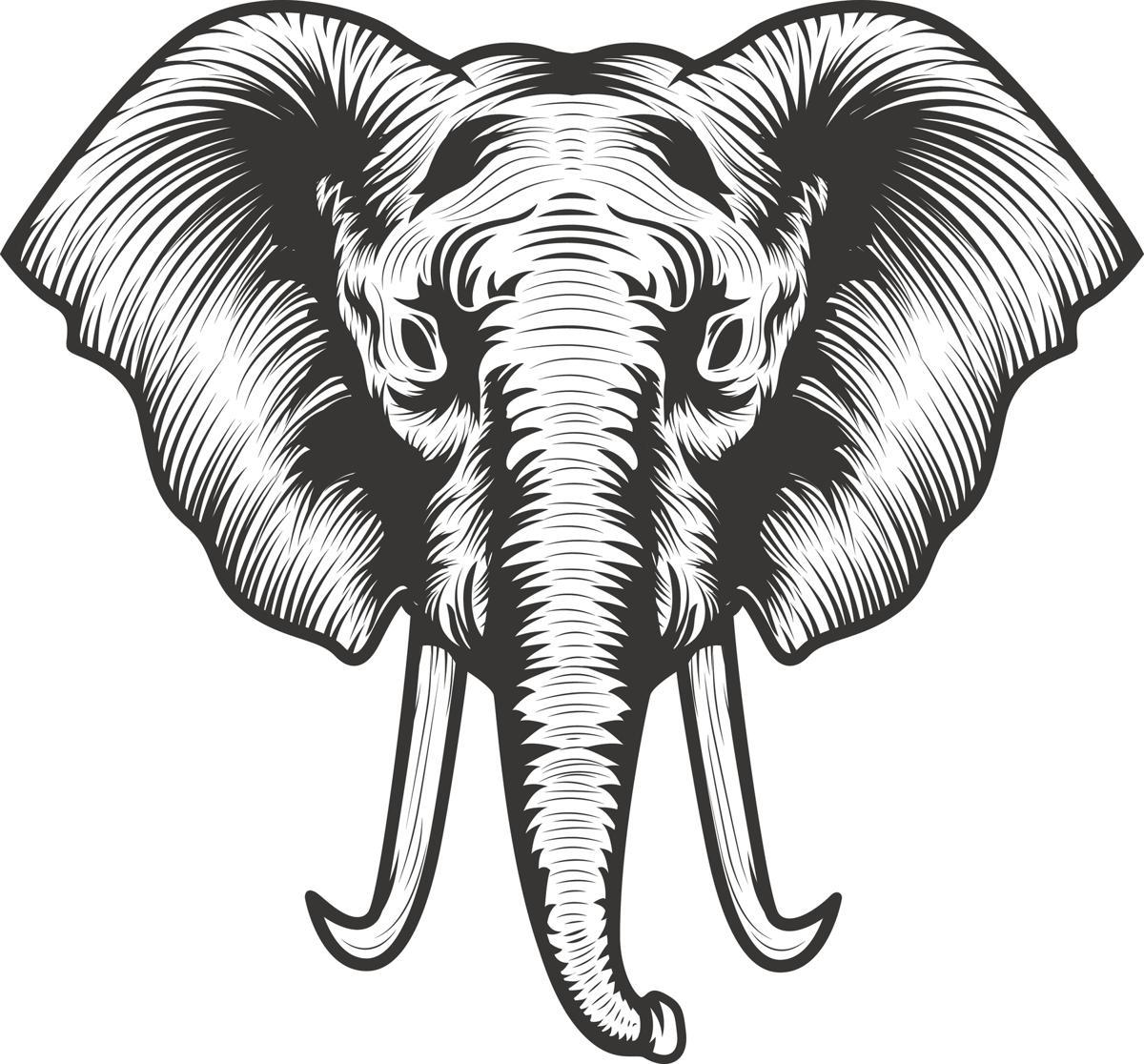 Elephant Head Illustration Tattoo Vector