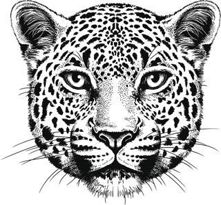 Leopard Head Portrait