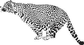 Leopard illustration tattoo