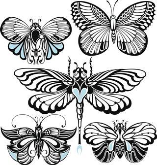 Butterfly illustration set