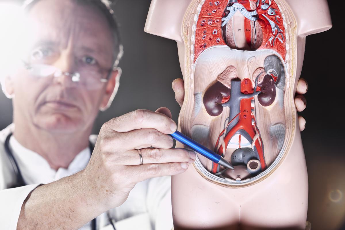 Картинки по запросу prostate milking pros and cons