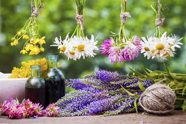Hanging healing herbs bunches