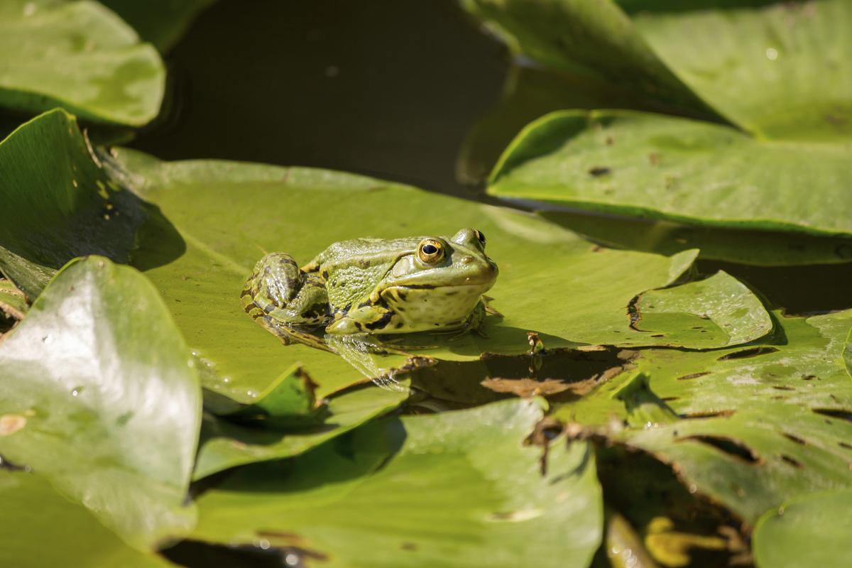 V Frog Kpm What Do Tree Fr...