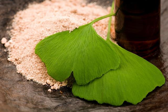 Ginko biloba essential oil with fresh leaves
