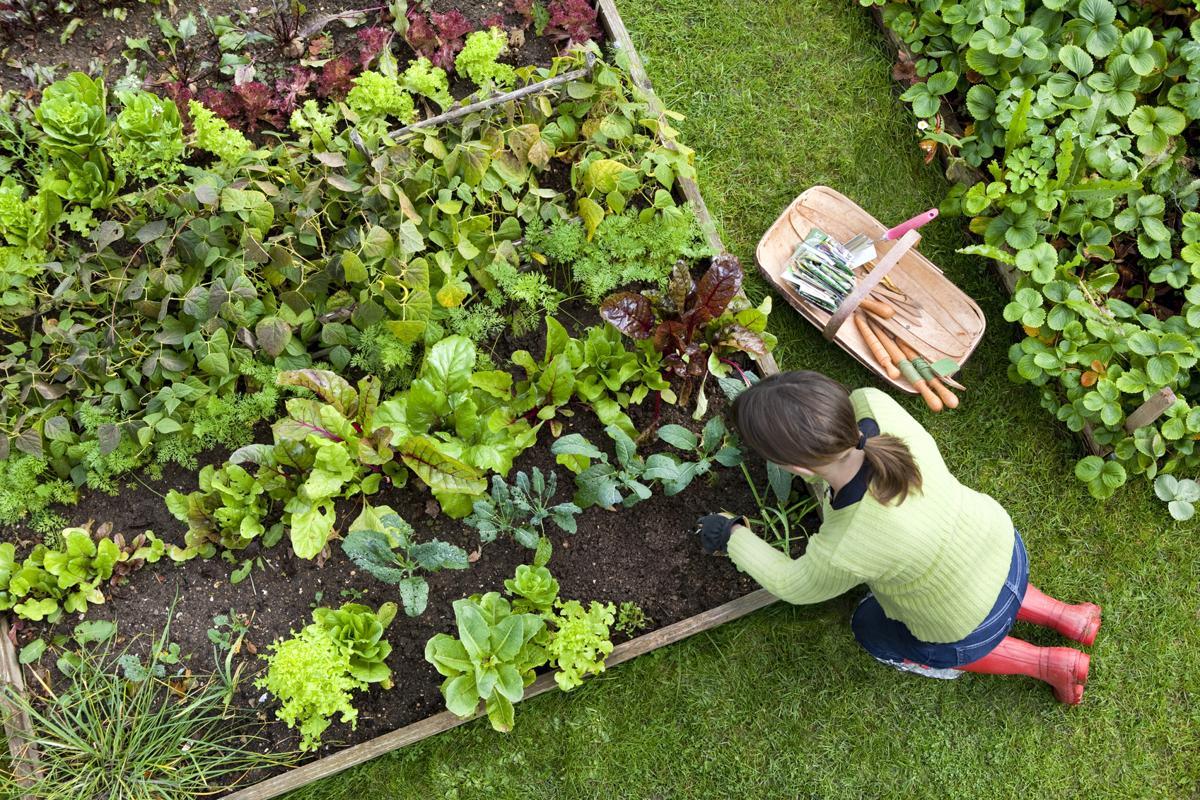 Nutritional Value of Vegetables