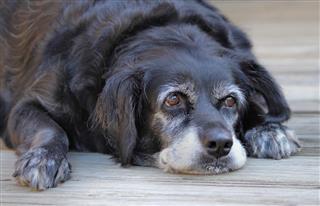 Old Sick Dog