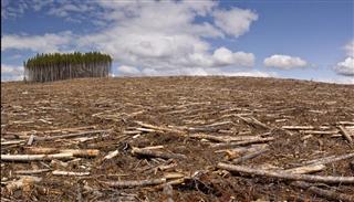 Clear cut logging