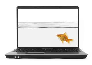 Goldfish inside notebook