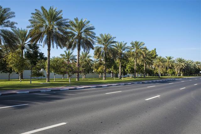 Palm Trees - Dubai Landscape