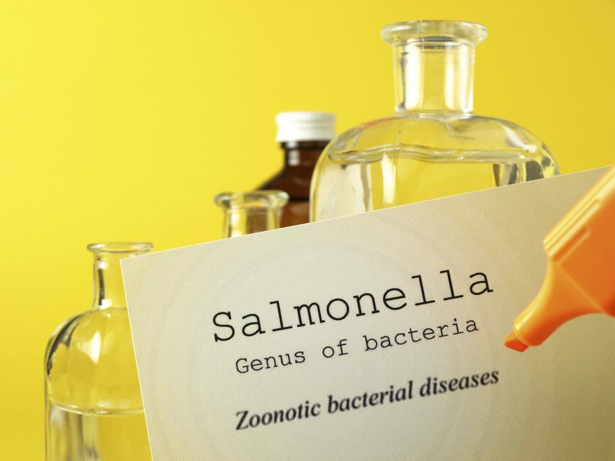 Salmonella Incubation Period