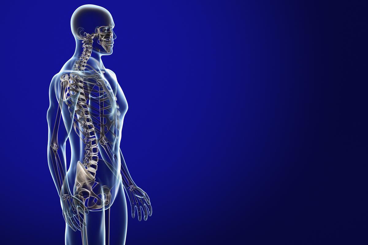 Labeled Skeletal System Diagram