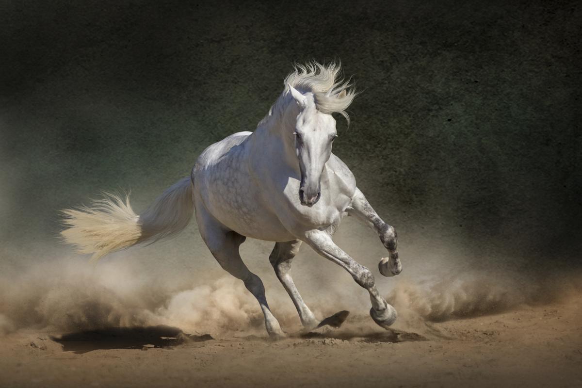 Mustang Horse Names - photo#36