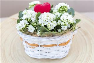 White Kalanchoe arrangement Valentines Flowers