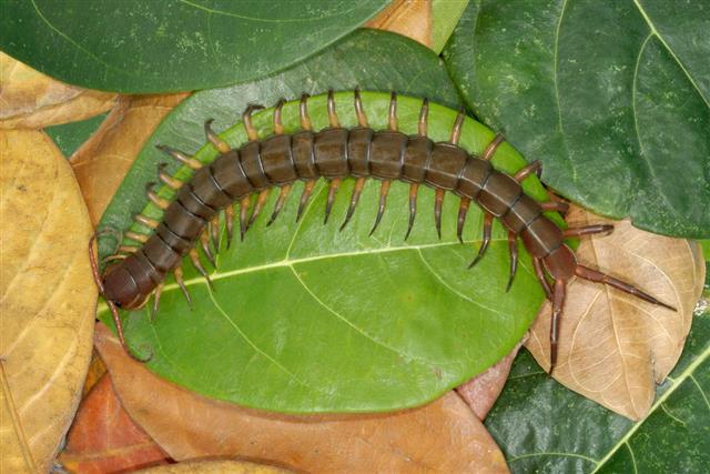 Aerial view of a centipede